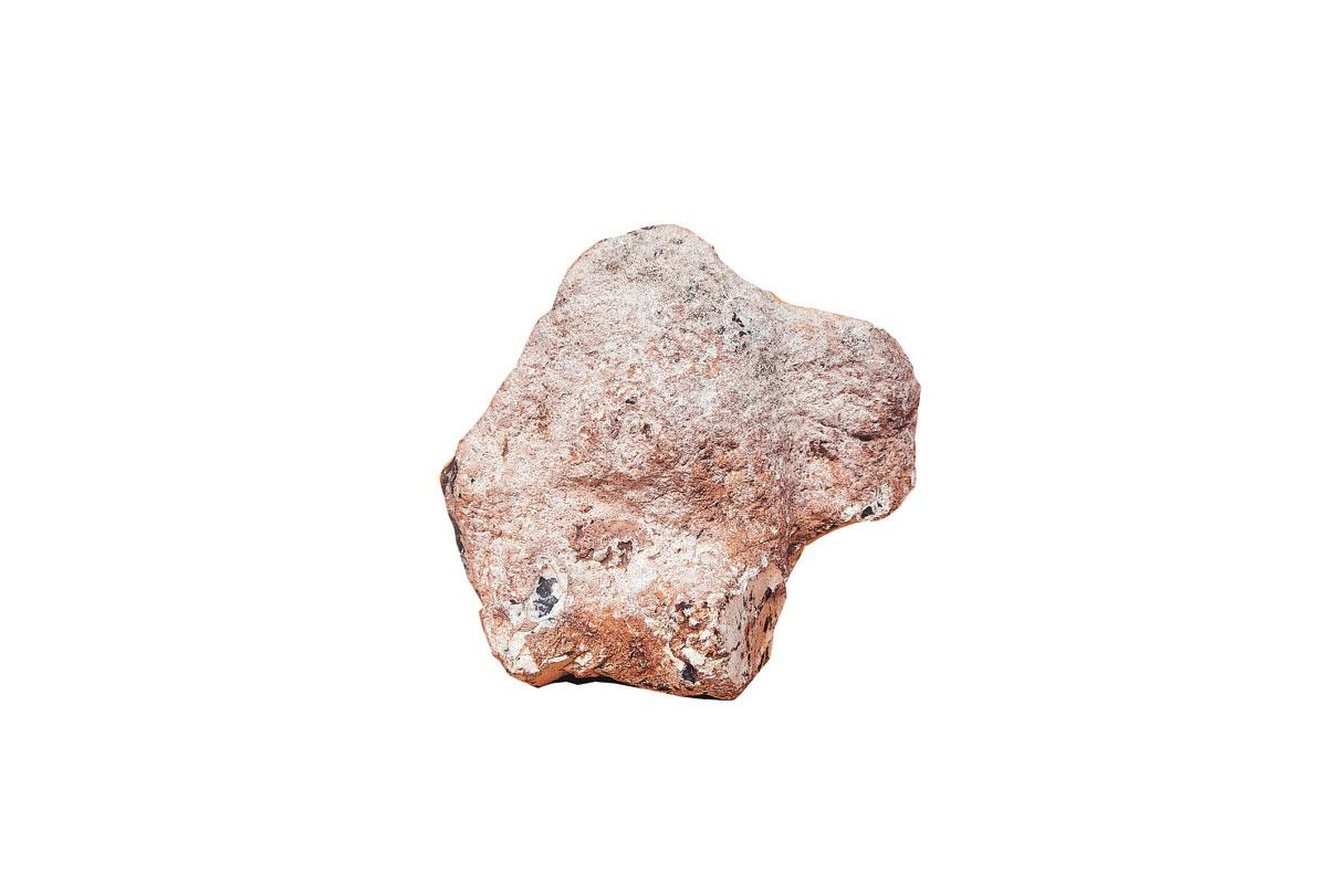 Bisonte T. R. 17,6 X 15,8